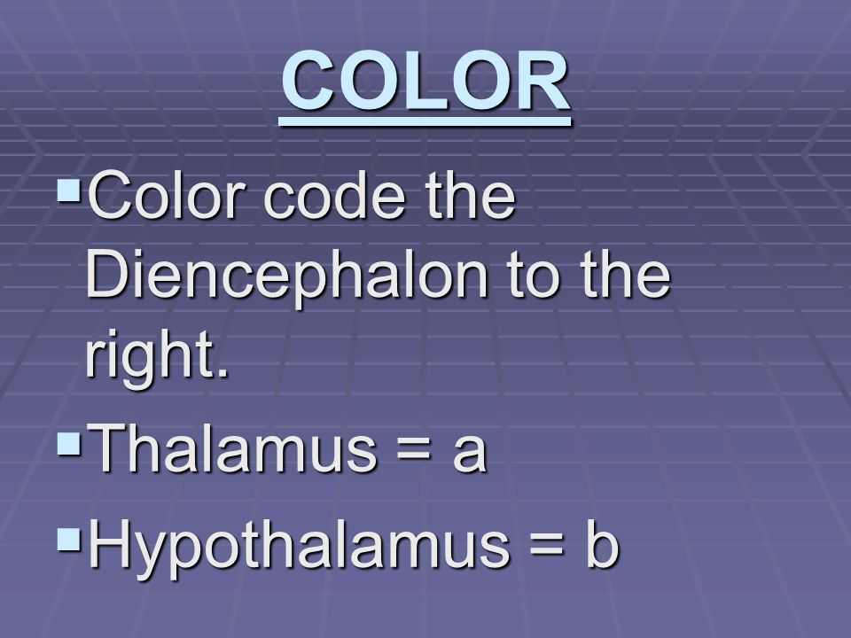 COLOR  Color code the Diencephalon to the right.  Thalamus = a  Hypothalamus = b