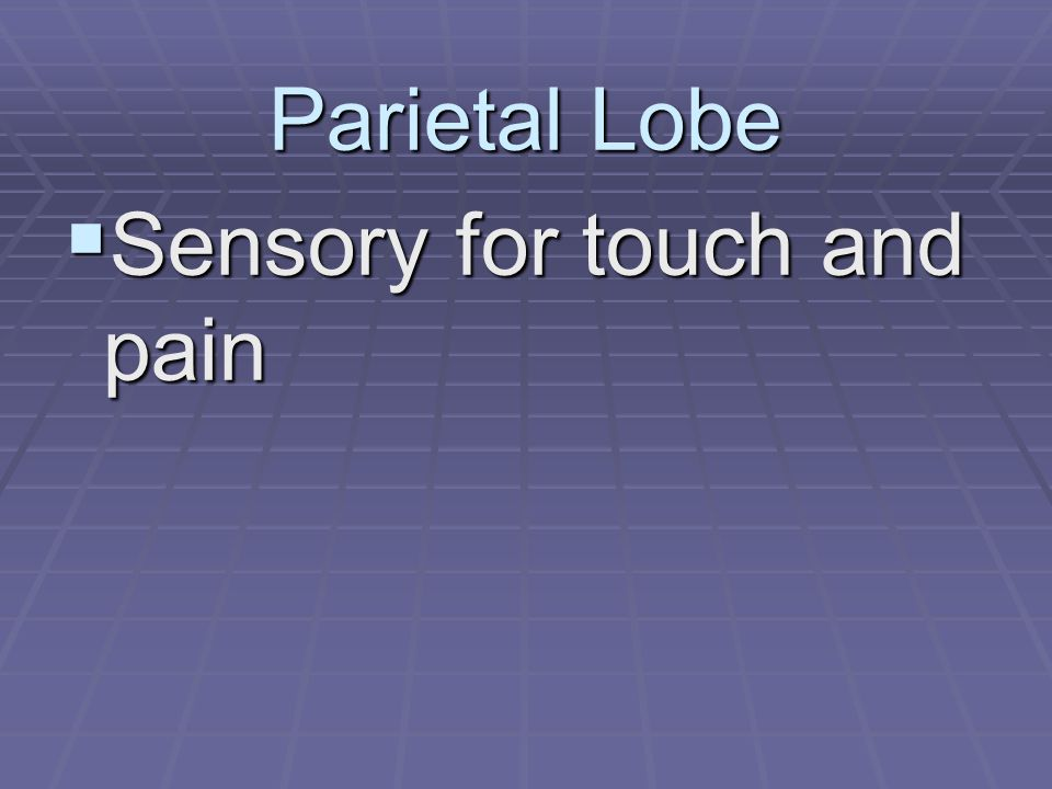 Parietal Lobe  Sensory for touch and pain