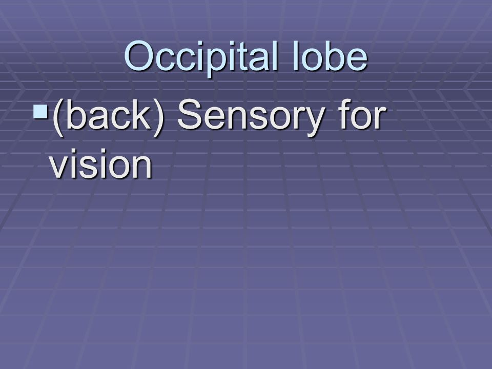 Occipital lobe  (back) Sensory for vision