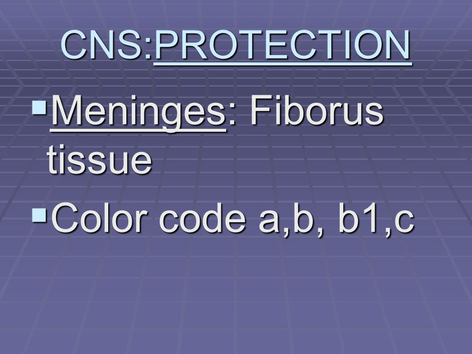 CNS:PROTECTION  Meninges: Fiborus tissue  Color code a,b, b1,c