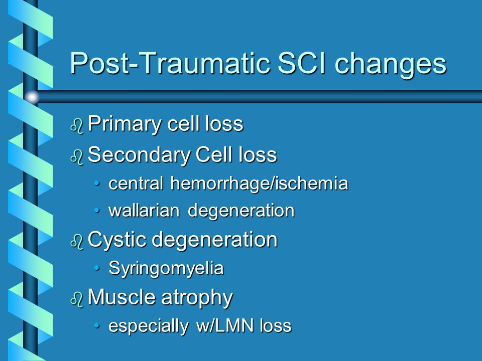 Post-Traumatic SCI changes b Primary cell loss b Secondary Cell loss central hemorrhage/ischemiacentral hemorrhage/ischemia wallarian degenerationwallarian degeneration b Cystic degeneration SyringomyeliaSyringomyelia b Muscle atrophy especially w/LMN lossespecially w/LMN loss