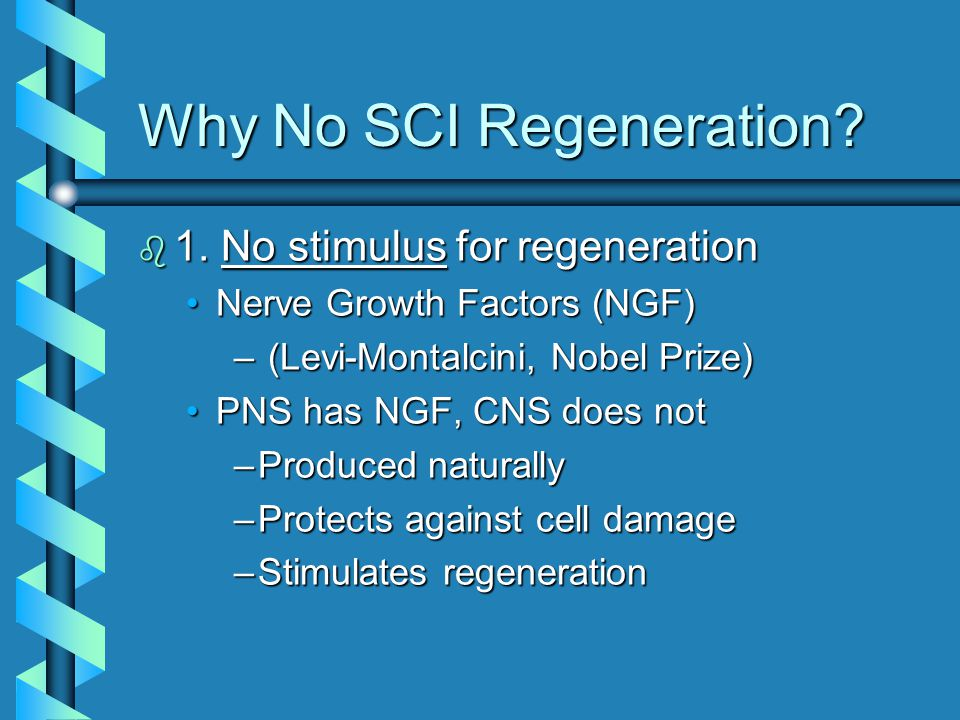 Why No SCI Regeneration. b 1.