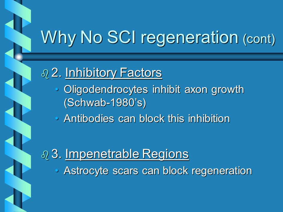 Why No SCI regeneration (cont) b 2.