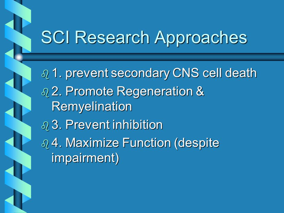 SCI Research Approaches b 1. prevent secondary CNS cell death b 2. Promote Regeneration & Remyelination b 3. Prevent inhibition b 4. Maximize Function