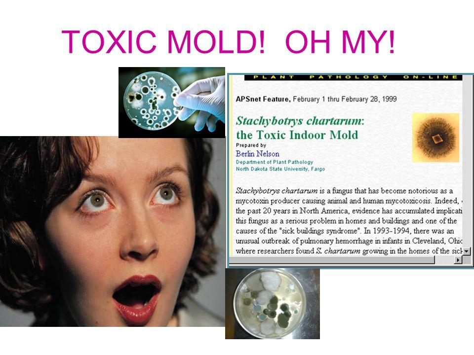 TOXIC MOLD! OH MY!