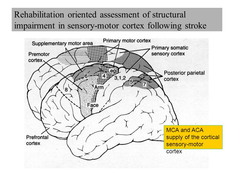 Rehabilitation oriented assessment of structural impairment in sensory-motor cortex following stroke MCA and ACA supply of the cortical sensory-motor cortex