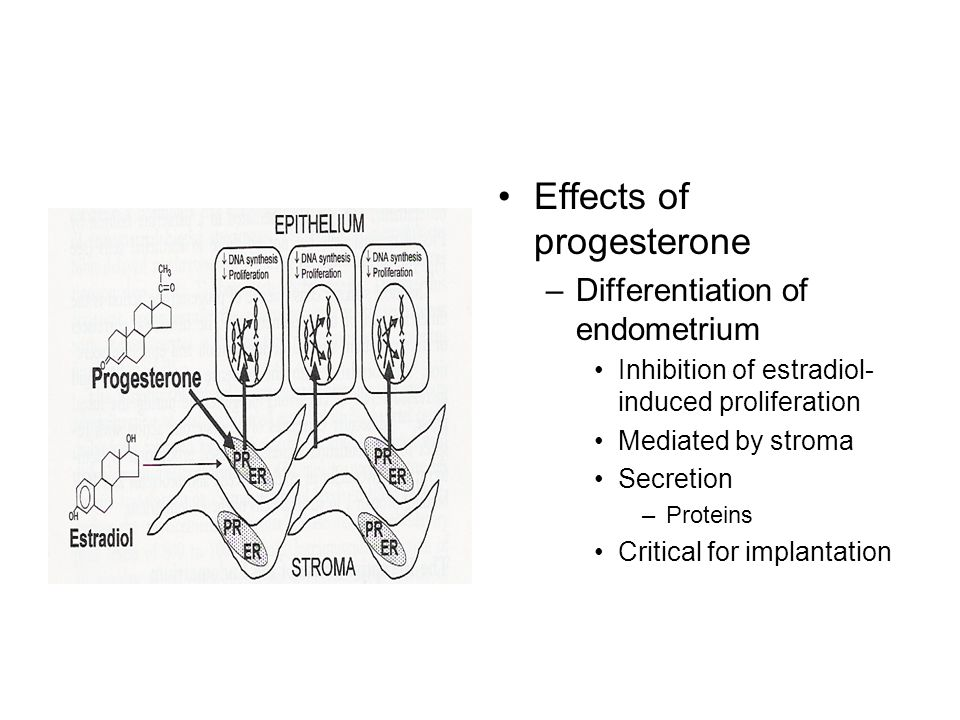 Effects of progesterone –Differentiation of endometrium Inhibition of estradiol- induced proliferation Mediated by stroma Secretion –Proteins Critical for implantation