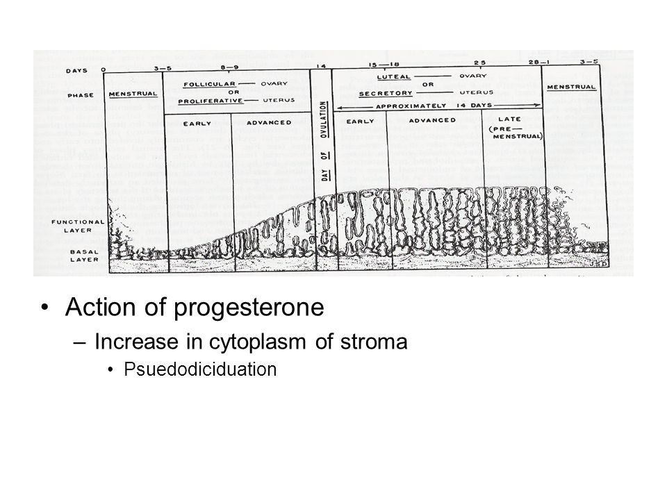 Action of progesterone –Increase in cytoplasm of stroma Psuedodiciduation