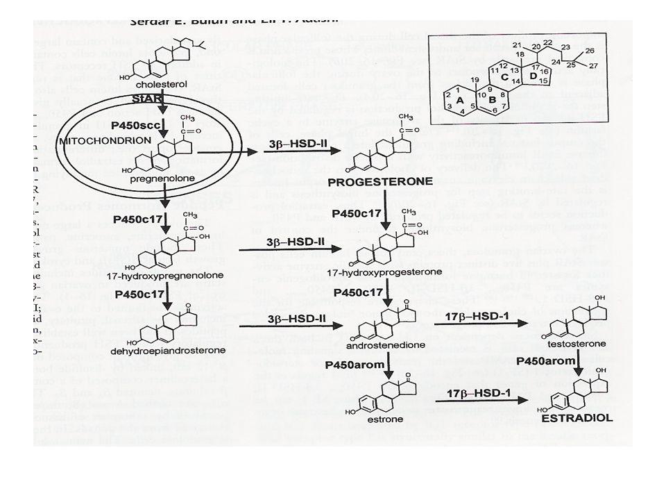 Action of progesterone –Increase in cytoplasm of stroma Psuedodiciduation