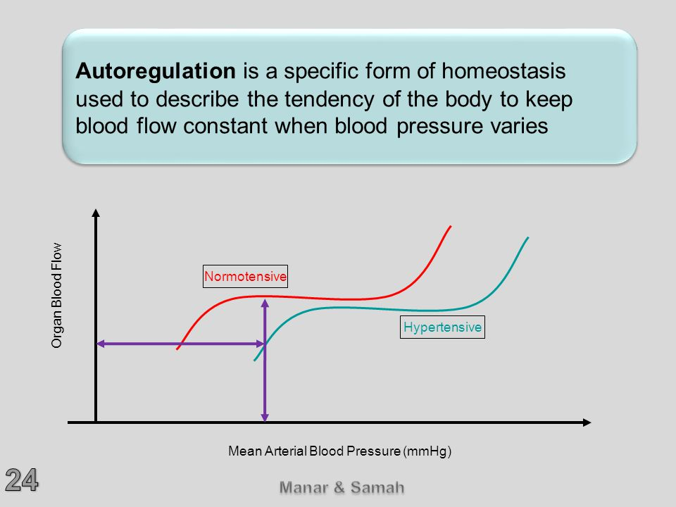 Autoregulation is a specific form of homeostasis used to describe the tendency of the body to keep blood flow constant when blood pressure varies Normotensive Hypertensive Organ Blood Flow Mean Arterial Blood Pressure (mmHg)