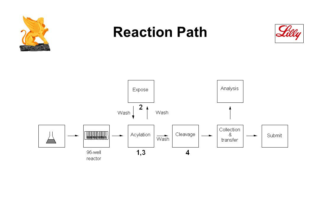 Reaction Path