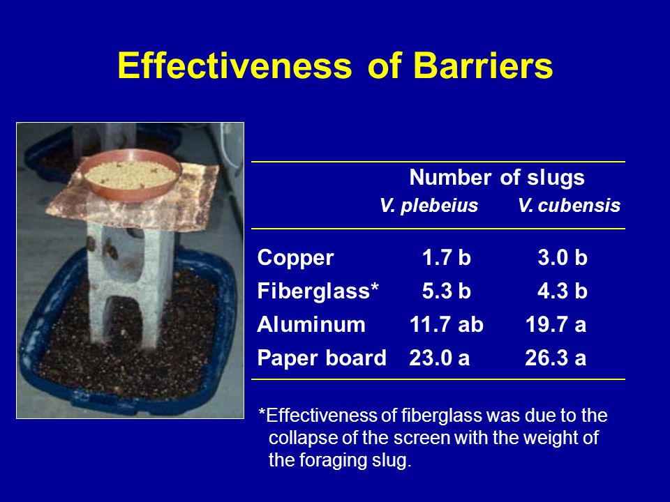 Effectiveness of Barriers Number of slugs V.plebeius V.
