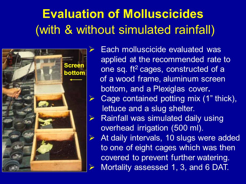 Evaluation of Molluscicides (with & without simulated rainfall)  Each molluscicide evaluated was applied at the recommended rate to one sq.