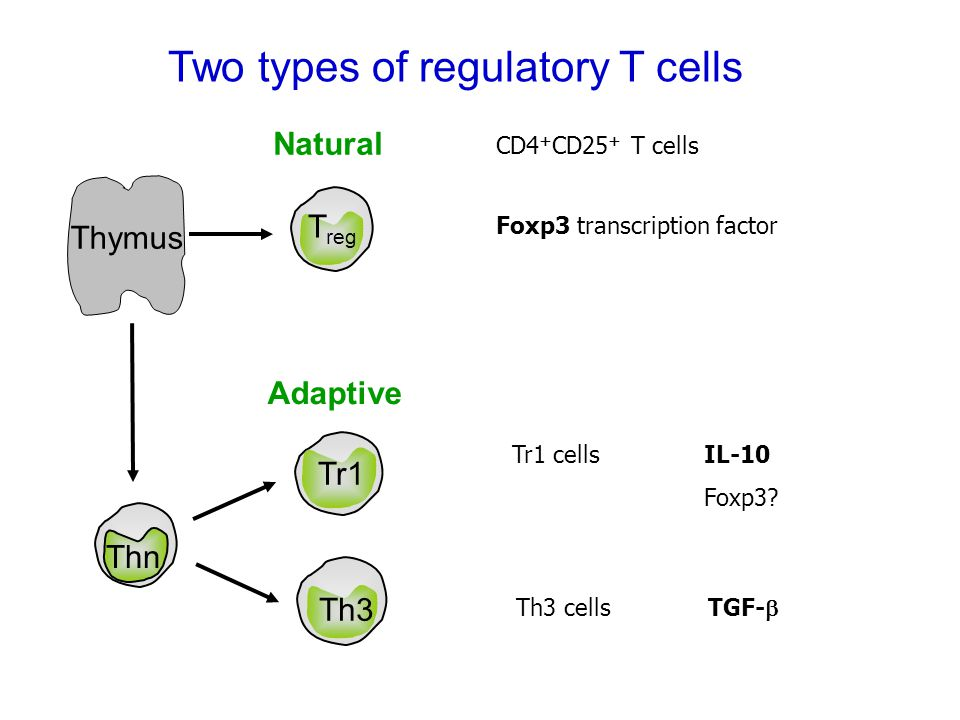 Two types of regulatory T cells Tr1 Th3 Tr1 cells IL-10 Foxp3.