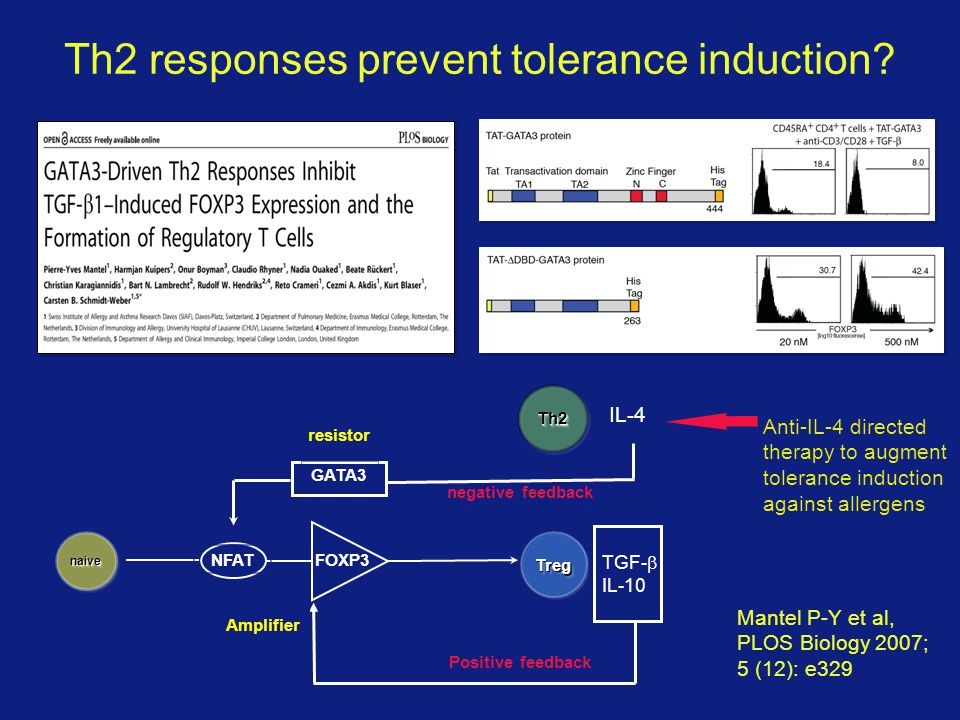 Th2 responses prevent tolerance induction.