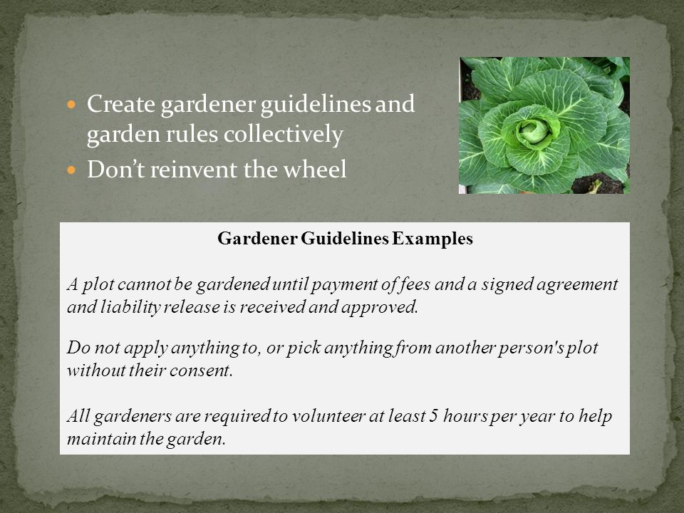 Create gardener guidelines and garden rules collectively Don't reinvent the wheel Gardener Guidelines Examples A plot cannot be gardened until payment of fees and a signed agreement and liability release is received and approved.