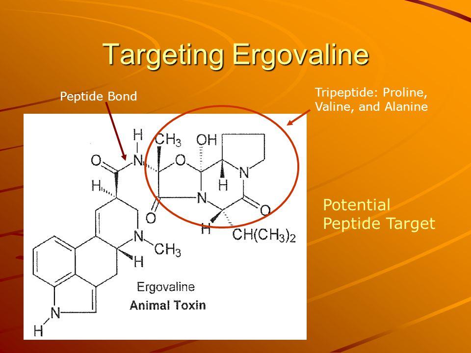 Targeting Ergovaline Peptide Bond Tripeptide: Proline, Valine, and Alanine Potential Peptide Target