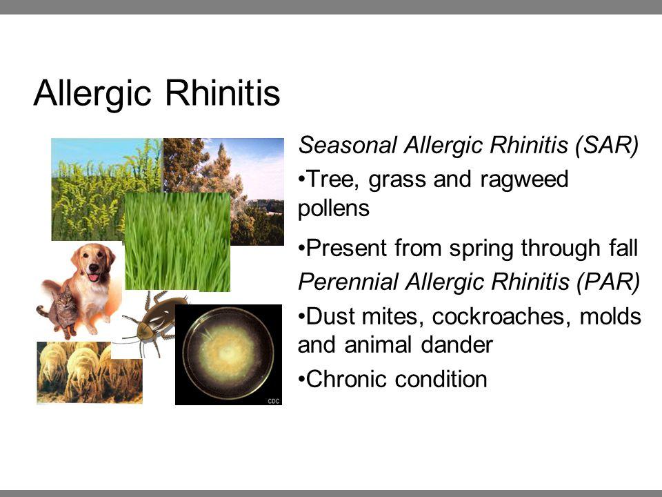 Allergic Rhinitis Seasonal Allergic Rhinitis (SAR) Tree, grass and ragweed pollens Present from spring through fall Perennial Allergic Rhinitis (PAR) Dust mites, cockroaches, molds and animal dander Chronic condition