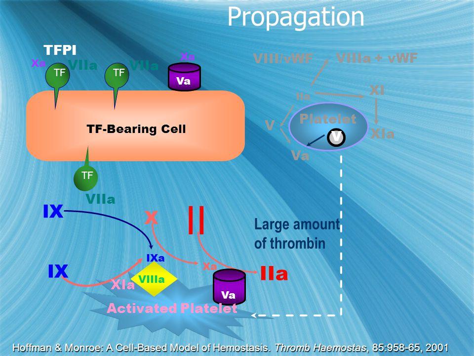 XIa Xa IXa X II IIa IX Activated Platelet Va XIa VIIIa IIa VIII/vWF XI XIa Platelet Va V VIIIa + vWF V IX VIIa TFPI TF-Bearing Cell TF VIIa Xa TF Va Large amount of thrombin Hoffman & Monroe: A Cell-Based Model of Hemostasis.