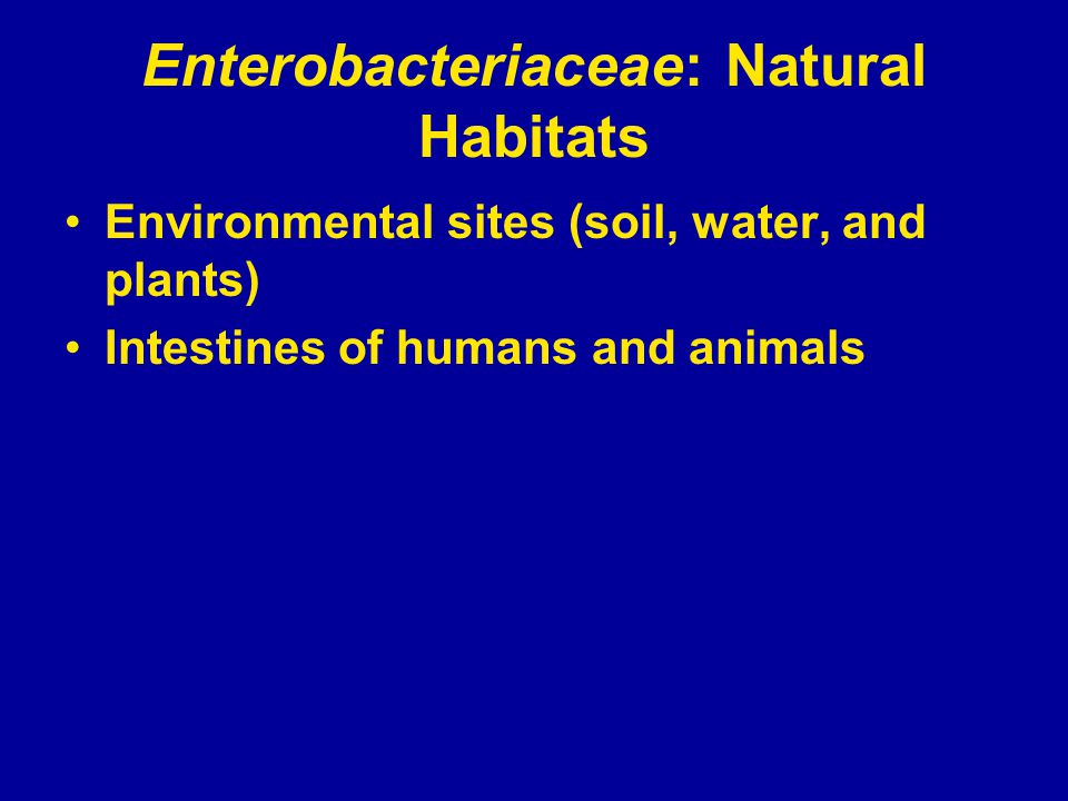 Enterobacteriaceae: Natural Habitats Environmental sites (soil, water, and plants) Intestines of humans and animals