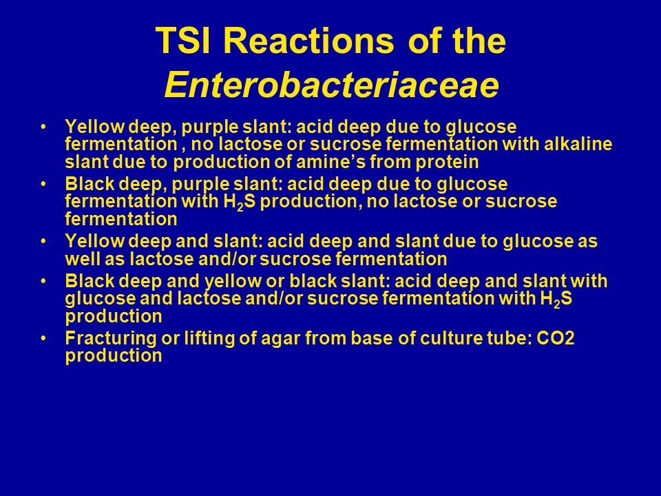 TSI Reactions of the Enterobacteriaceae Yellow deep, purple slant: acid deep due to glucose fermentation, no lactose or sucrose fermentation with alkaline slant due to production of amine's from protein Black deep, purple slant: acid deep due to glucose fermentation with H 2 S production, no lactose or sucrose fermentation Yellow deep and slant: acid deep and slant due to glucose as well as lactose and/or sucrose fermentation Black deep and yellow or black slant: acid deep and slant with glucose and lactose and/or sucrose fermentation with H 2 S production Fracturing or lifting of agar from base of culture tube: CO2 production