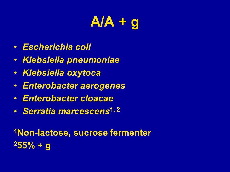 A/A + g Escherichia coli Klebsiella pneumoniae Klebsiella oxytoca Enterobacter aerogenes Enterobacter cloacae Serratia marcescens 1, 2 1 Non-lactose, sucrose fermenter 2 55% + g