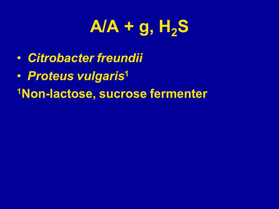 A/A + g, H 2 S Citrobacter freundii Proteus vulgaris 1 1 Non-lactose, sucrose fermenter
