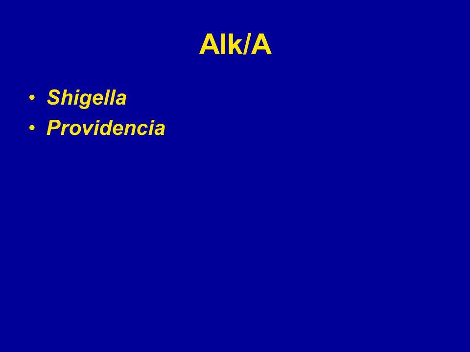 Alk/A Shigella Providencia
