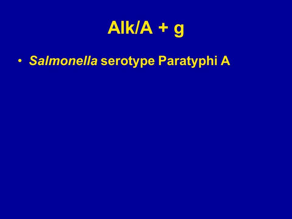 Alk/A + g Salmonella serotype Paratyphi A