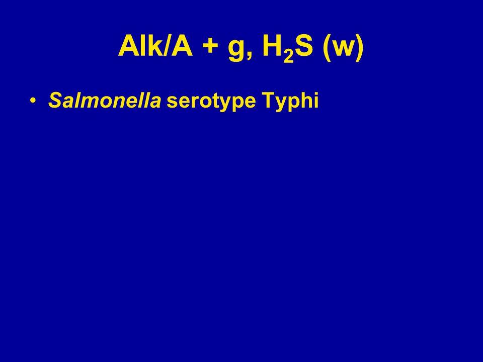 Alk/A + g, H 2 S (w) Salmonella serotype Typhi