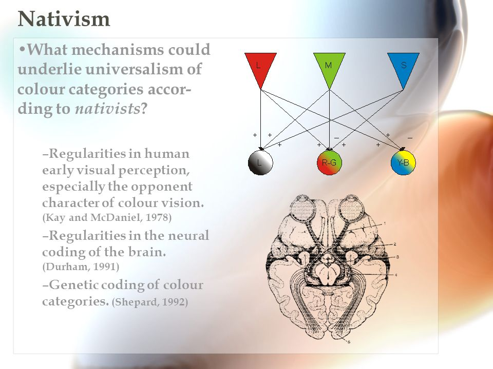 Summary Empiricism is not a good candidate to explain universalism – There is not enough ecological pressure.