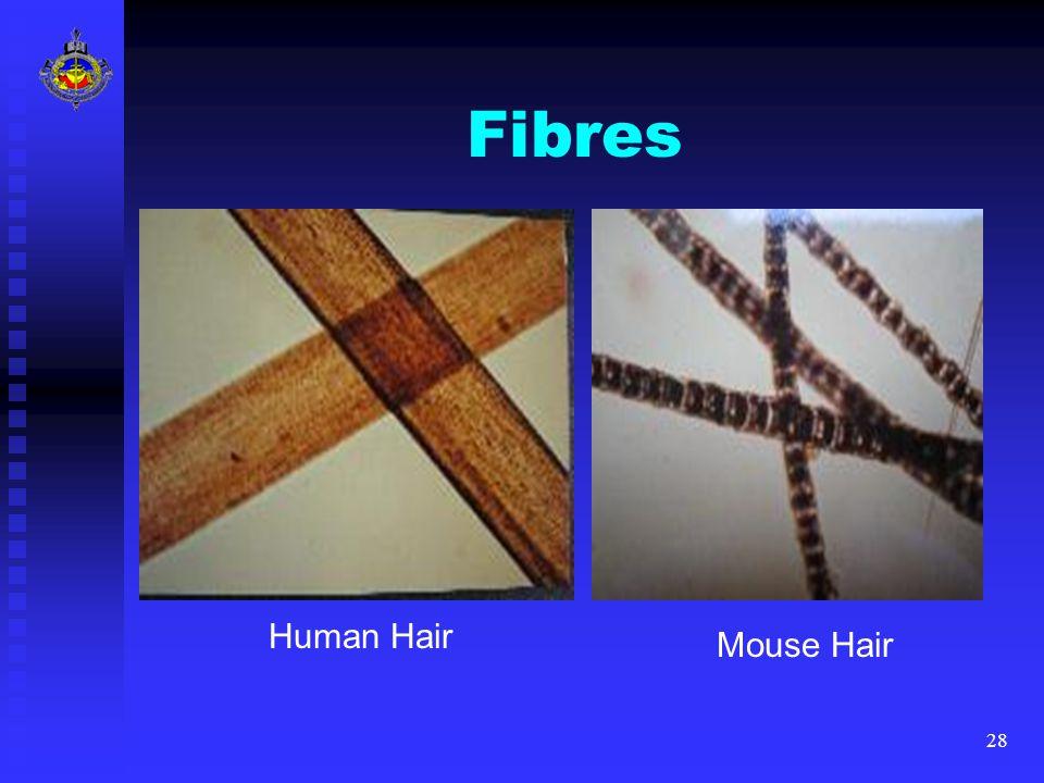 28 Fibres Human Hair Mouse Hair