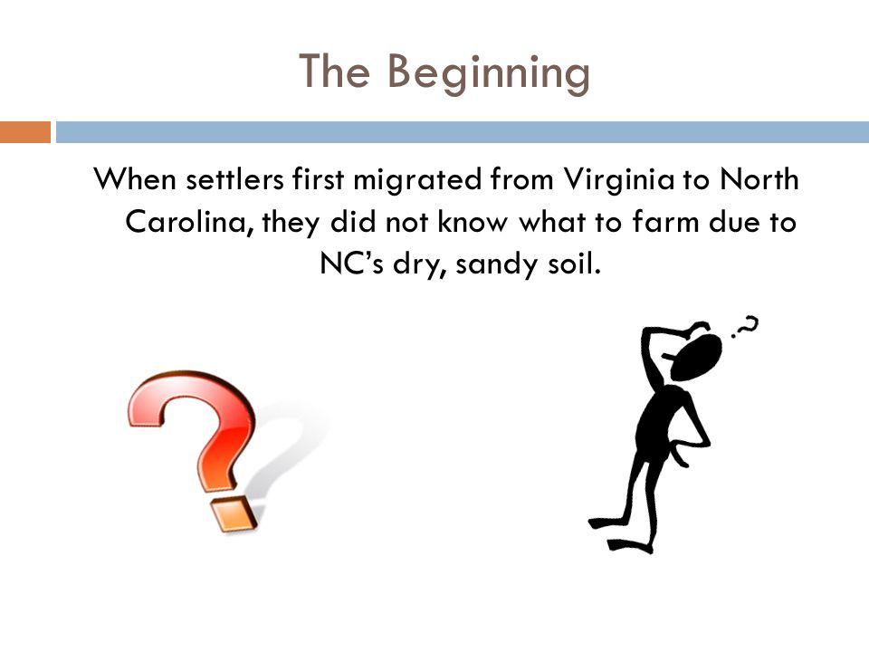 The Beginning When settlers first migrated from Virginia to North Carolina, they did not know what to farm due to NC's dry, sandy soil.
