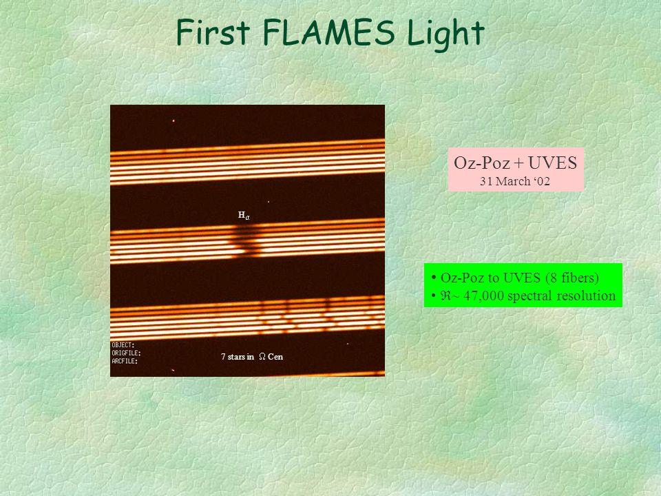 FLAMES 25' field Corrector Oz-Poz & Giraffe