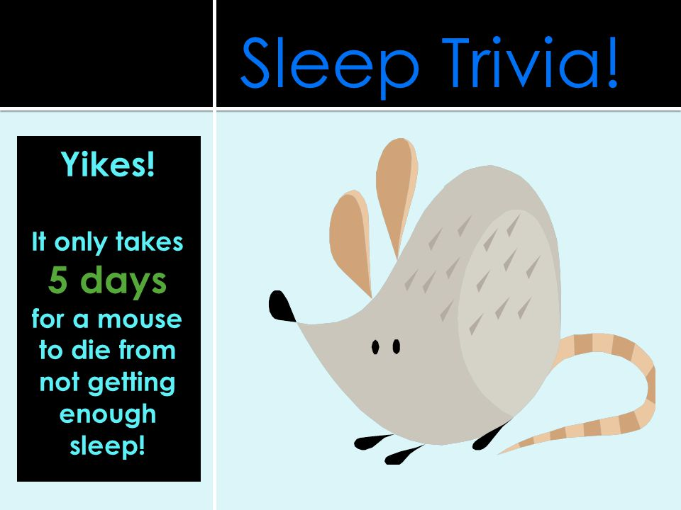 Sleep Trivia! Yikes! It only takes 5 days for a mouse to die from not getting enough sleep!