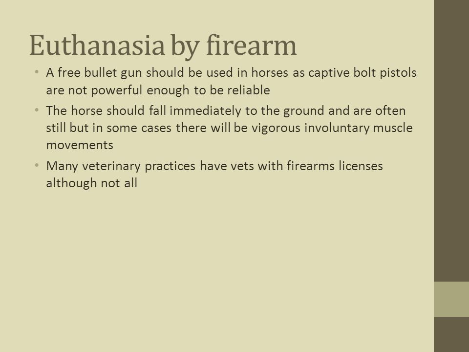 Euthanasia by firearm A free bullet gun should be used in horses as captive bolt pistols are not powerful enough to be reliable The horse should fall