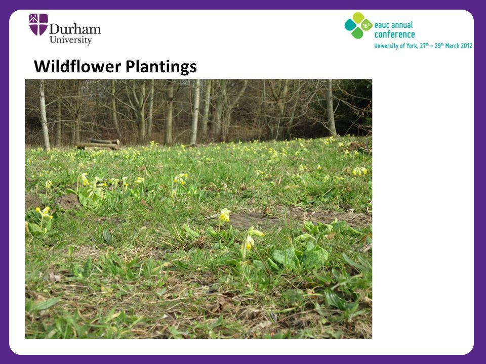 Wildflower Plantings