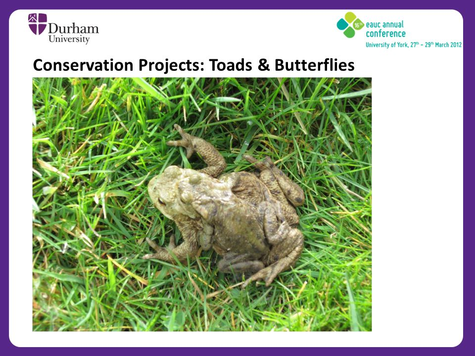 Conservation Projects: Toads & Butterflies
