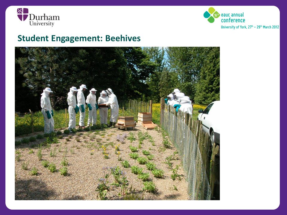 Student Engagement: Beehives