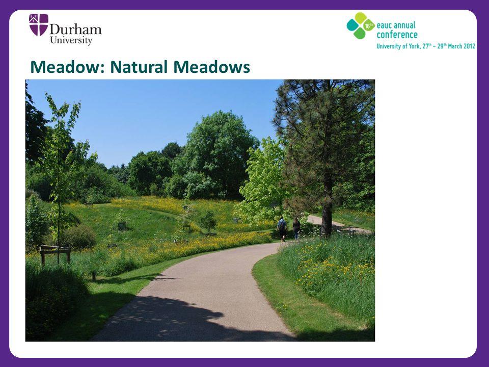 Meadow: Natural Meadows