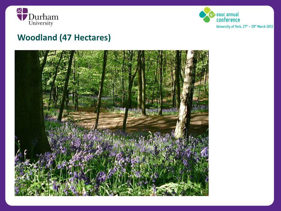 Woodland (47 Hectares)