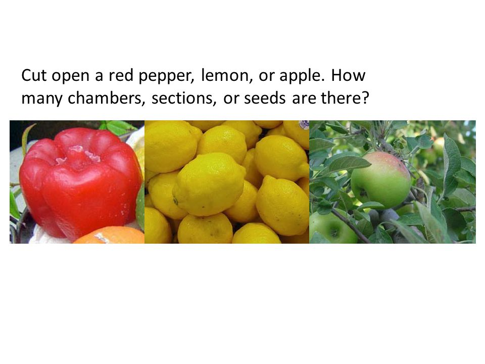 Cut open a red pepper, lemon, or apple. How many chambers, sections, or seeds are there?
