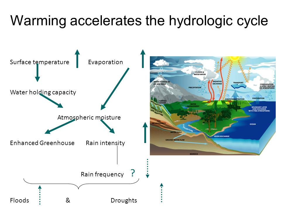Warming accelerates the hydrologic cycle Surface temperature Evaporation Water holding capacity Atmospheric moisture Enhanced Greenhouse Rain intensity Rain frequency .
