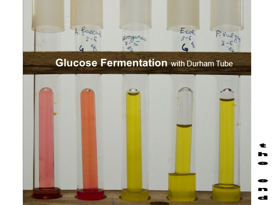 Glucose Fermentation with Durham Tube