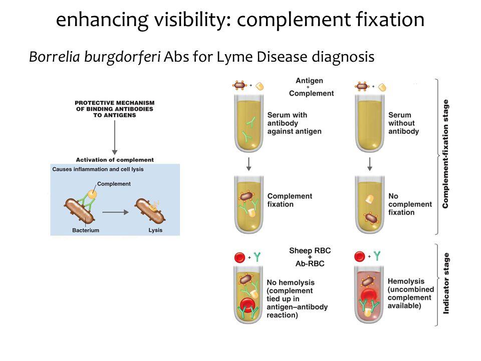 enhancing visibility: complement fixation Borrelia burgdorferi Abs for Lyme Disease diagnosis