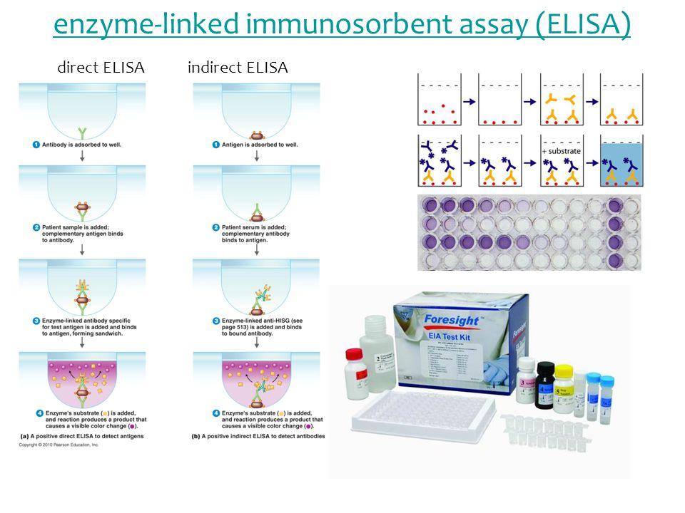 enzyme-linked immunosorbent assay (ELISA) indirect ELISAdirect ELISA