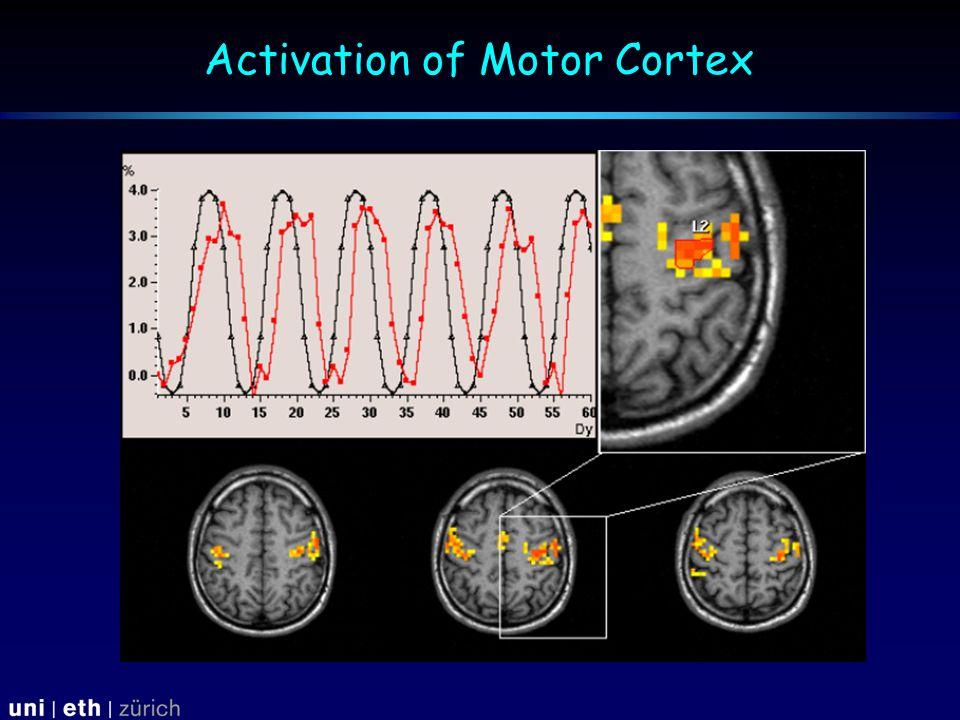 Activation of Motor Cortex
