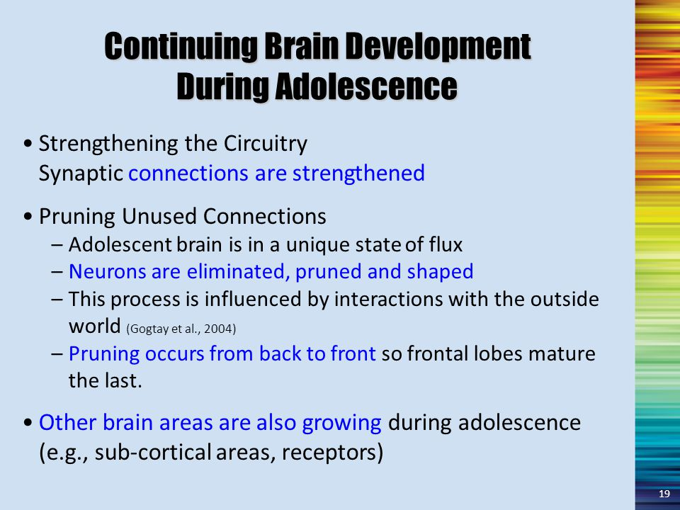 Continuing Brain Development During Adolescence Strengthening the Circuitry Synaptic connections are strengthened Pruning Unused Connections –Adolescent brain is in a unique state of flux –Neurons are eliminated, pruned and shaped –This process is influenced by interactions with the outside world (Gogtay et al., 2004) –Pruning occurs from back to front so frontal lobes mature the last.