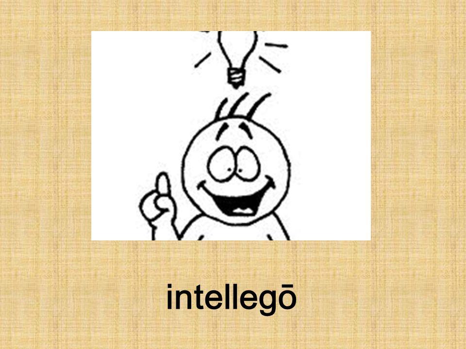 intellegō