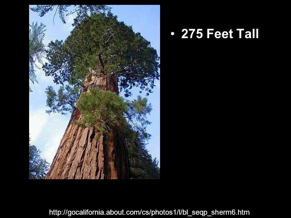 275 Feet Tall